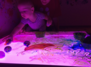 Art Play & Explore! Paint, Clay and Print play (16 months - 4 years)